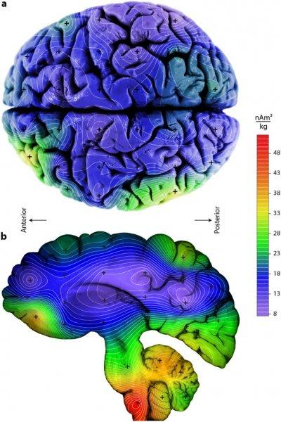 Его Величество наш Мозг! Часть 2